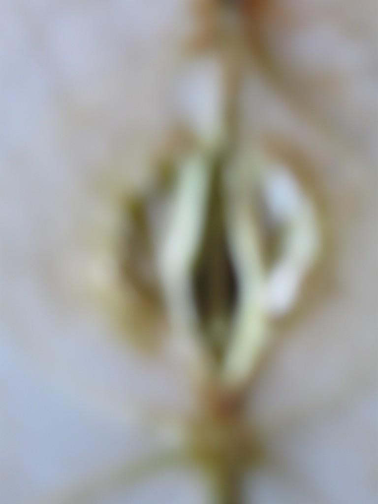 keine Vagina